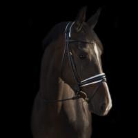 Уздечка с поводом Edinburgh Black/White от Utzon Equestrian