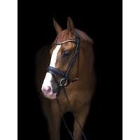 Уздечка Olympic от Utzon Equestrian